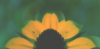 VA - Bullfinch Summer Compilation 2018 [Bullfinch]